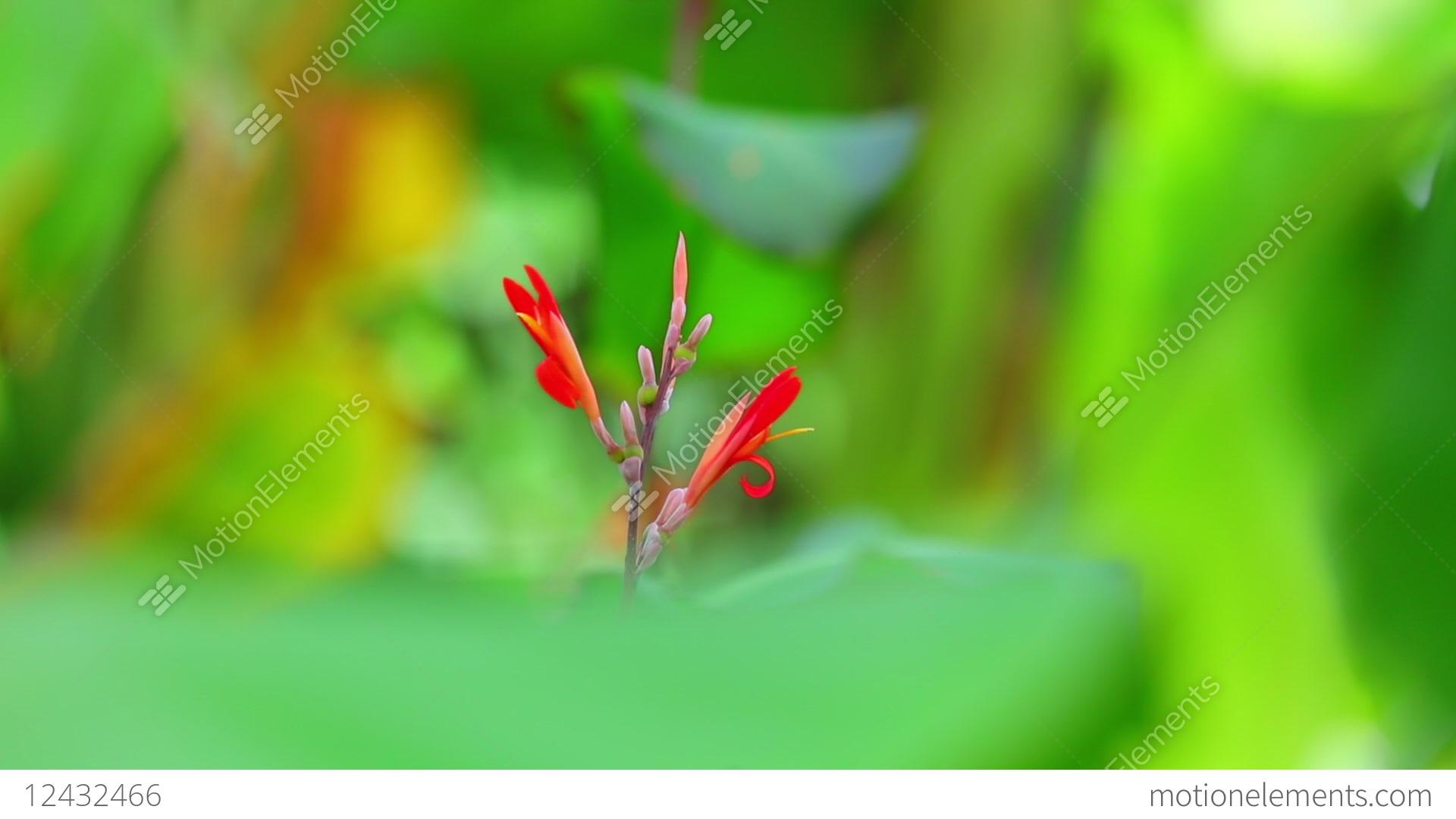 Flowers Bokeh Pic - Flowers Healthy