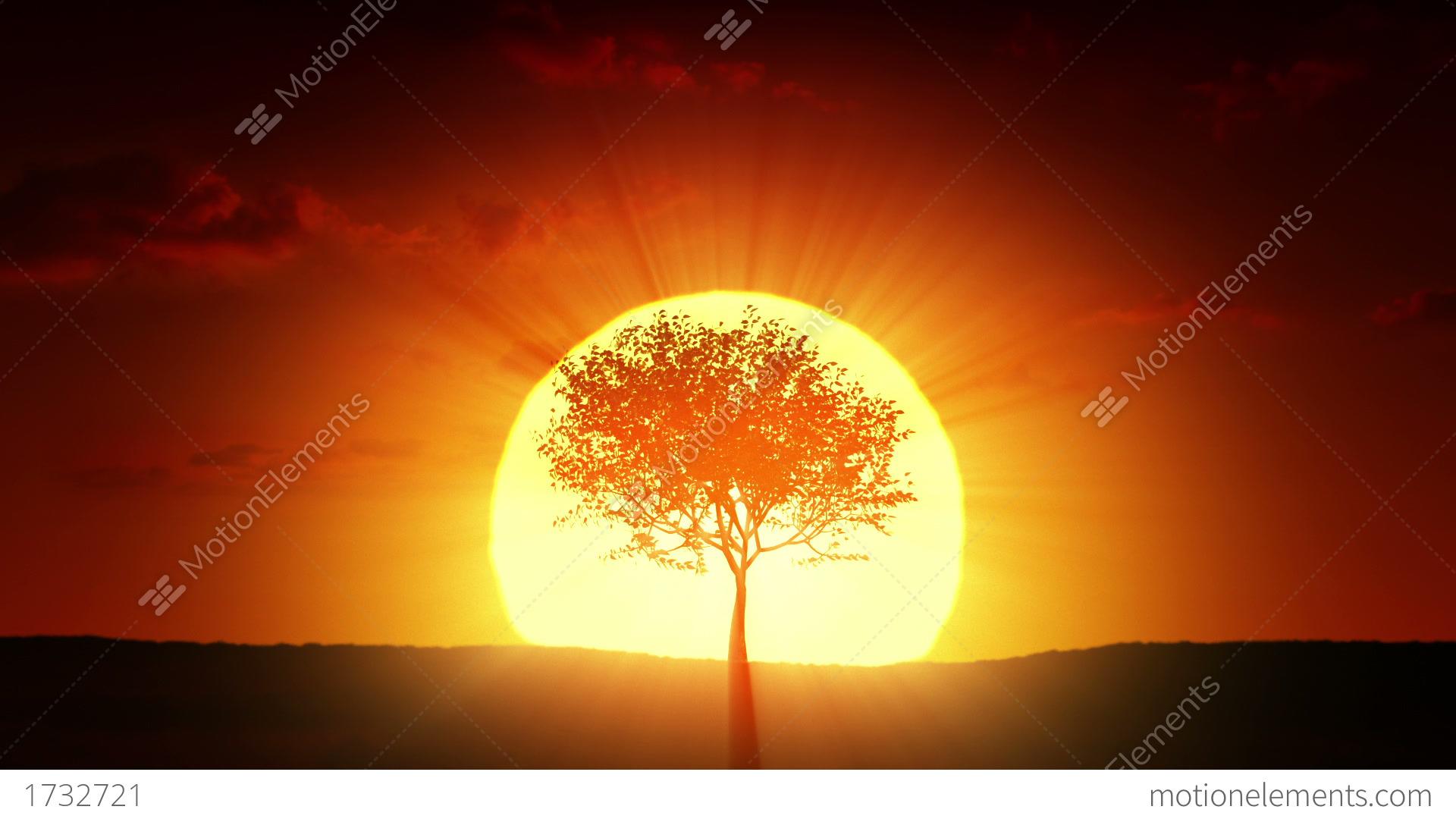 growing tree at sunrise stock animation 1732721