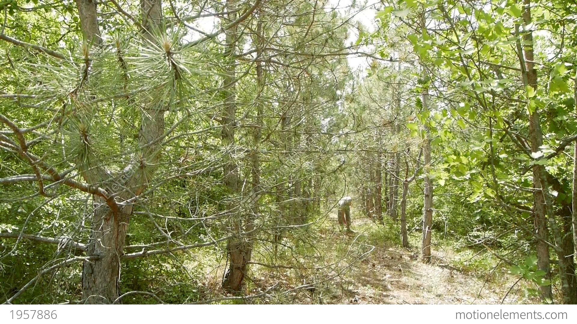 A Man Walks Through The Woods Lizenzfreie Videos   1957886