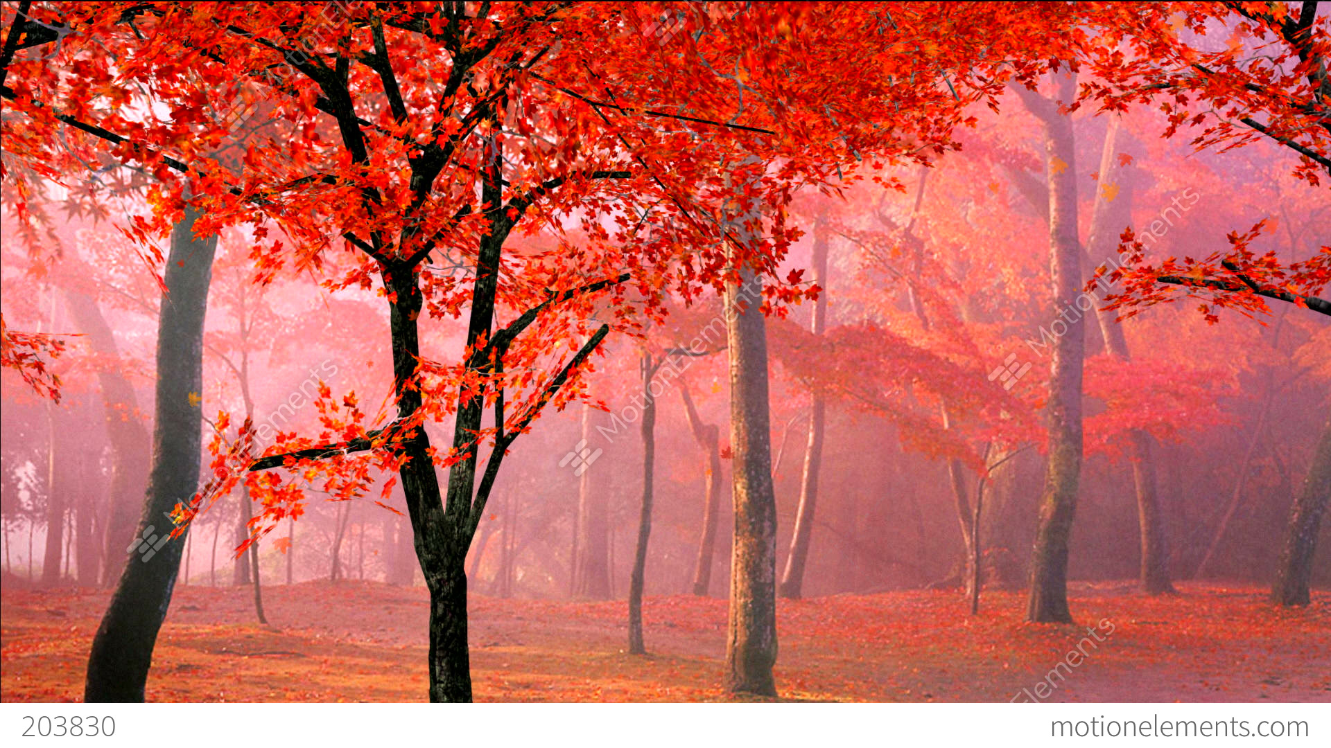 Red Maple Leaves Falling In Wind Stock Animation | 203830