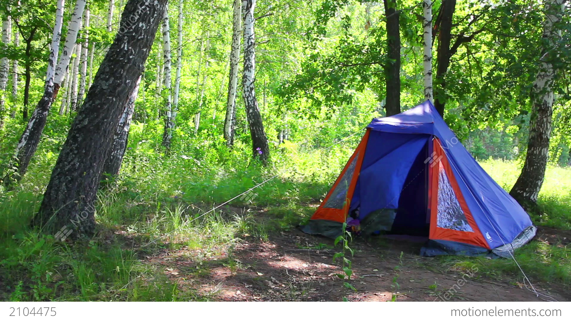 c&ing tent in summer birch forest Stock Video Footage & Camping Tent In Summer Birch Forest Stock video footage | 2104475