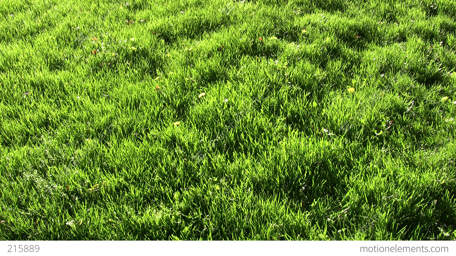 sunlight on the grass Grass in shady areas needs less fertilizer than grass growing in full sun spreading a thin layer of compost is a great way to give shady lawns a boost in early spring if you plan to aerate, spread compost after aerating.