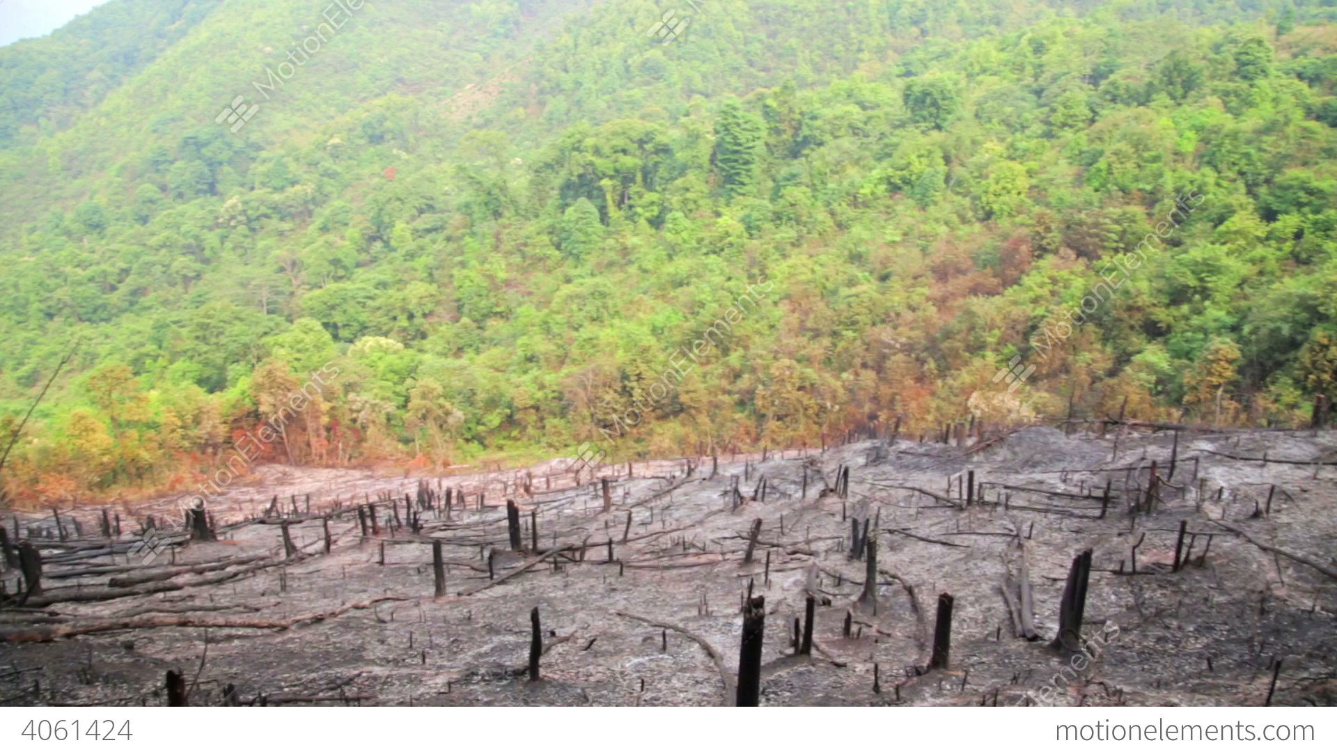English Country Style Deforestation After Forest Fire Natural Disaster Stock