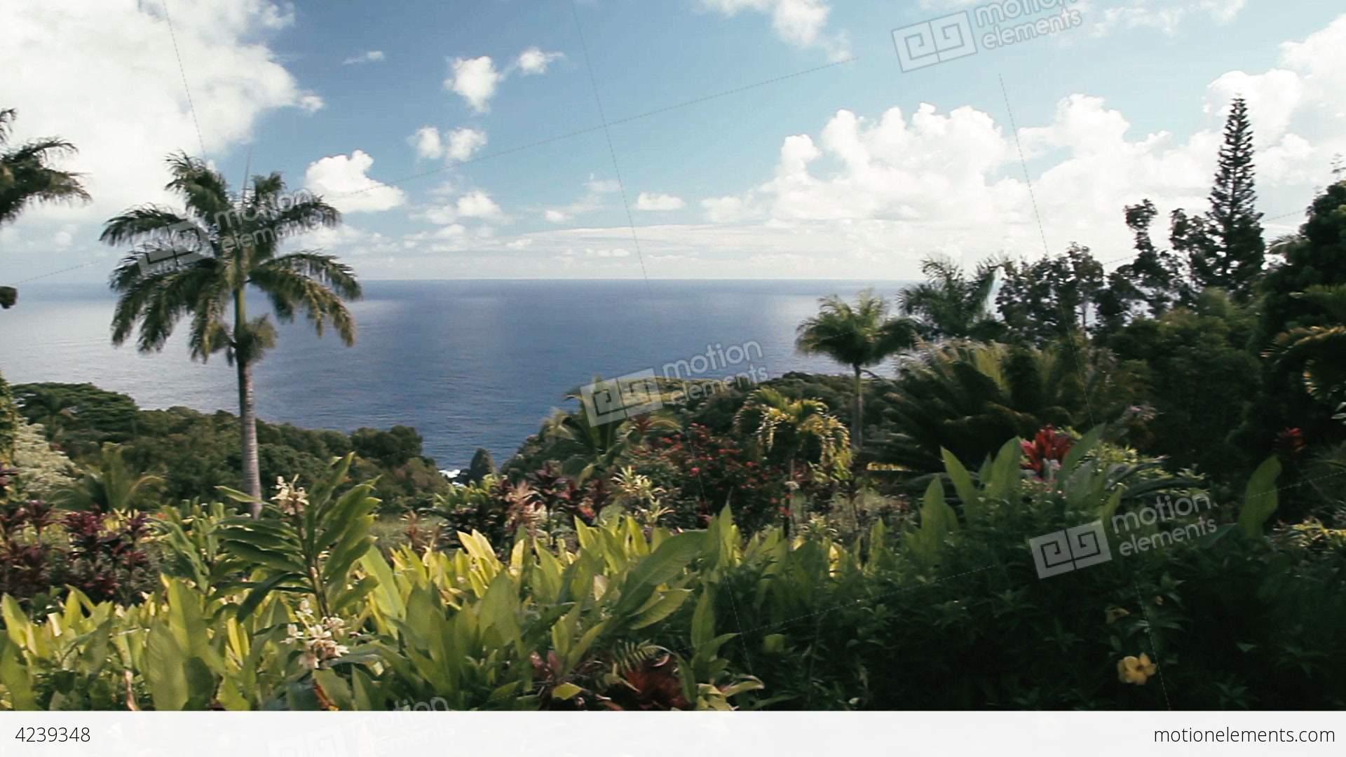 1080p Garden Of Eden Maui Hawaii Stock Video Footage 4239348