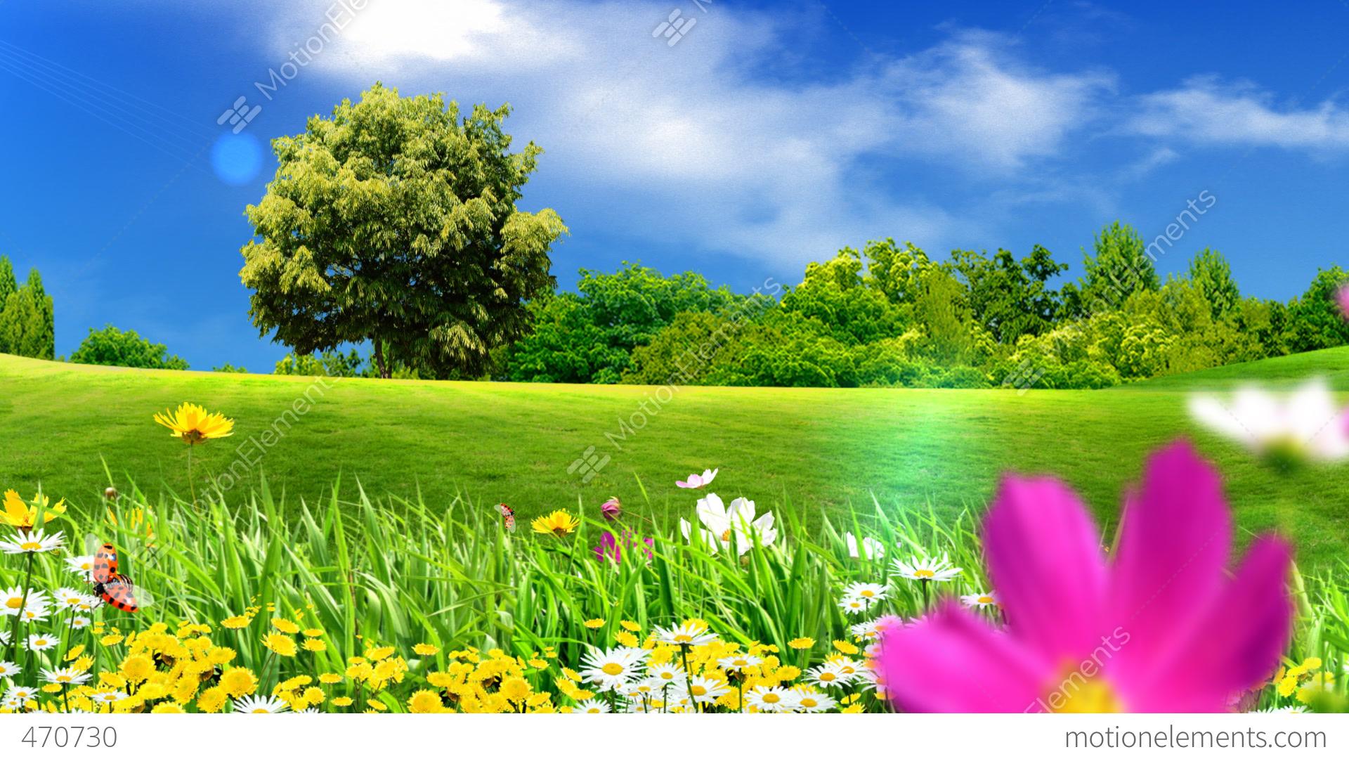 Dew Drops on Green Grass Morning Wallpaper For Desktop
