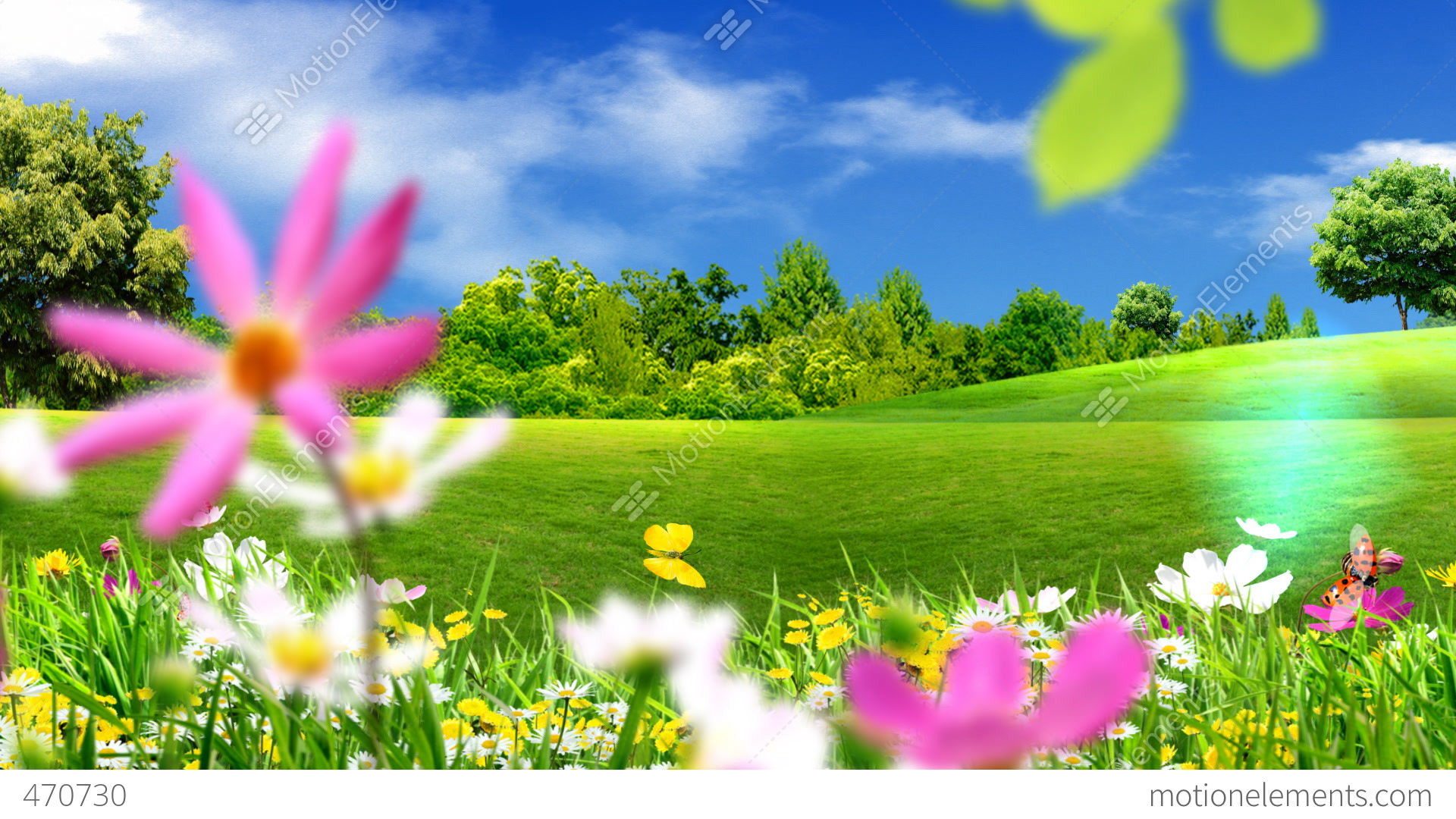 Green Meadows And Flowers Stock Animation   470730