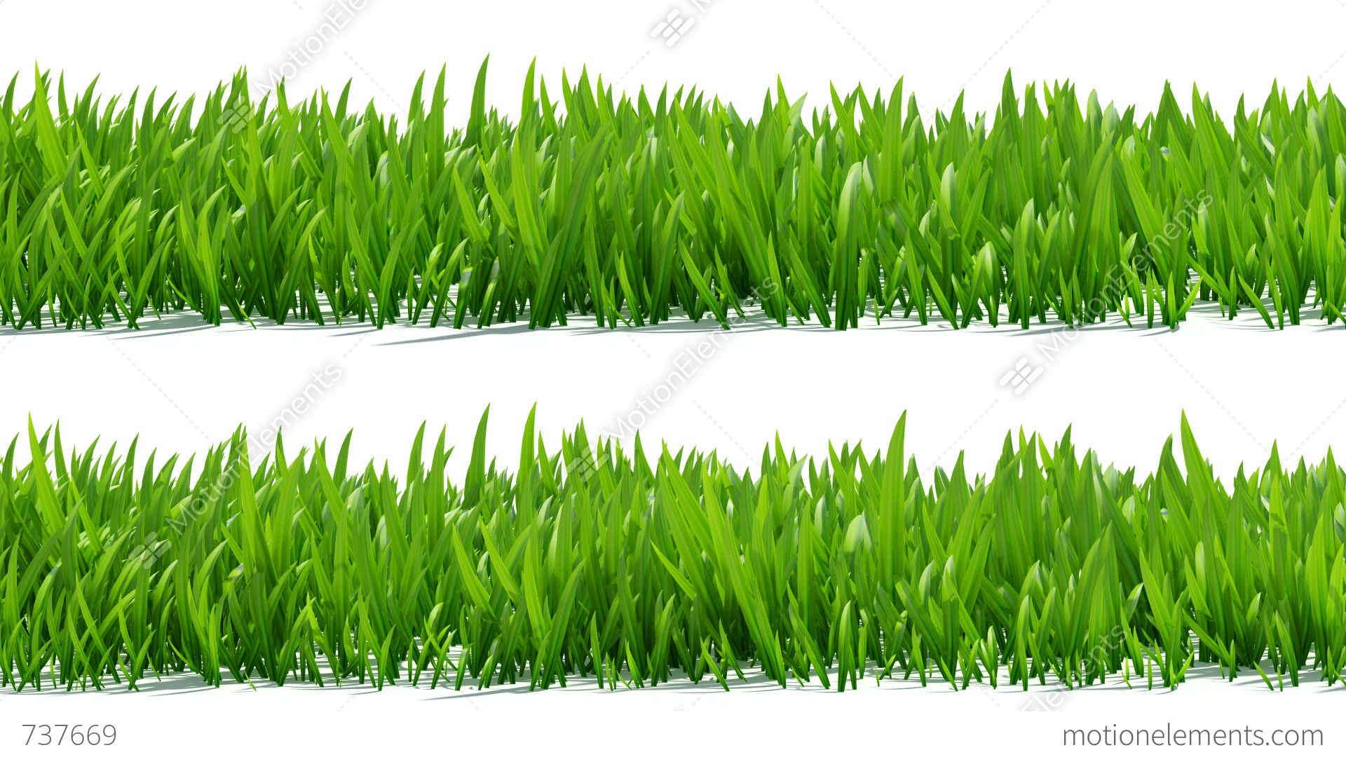 green grass field animated. Growing Grass With Alpha Channel Stock Video Footage Green Field Animated