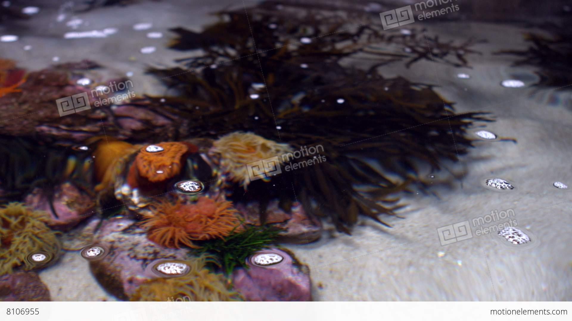 Aquarium fish tank in south africa - Fish Tank At The Aquarium Stock Video Footage