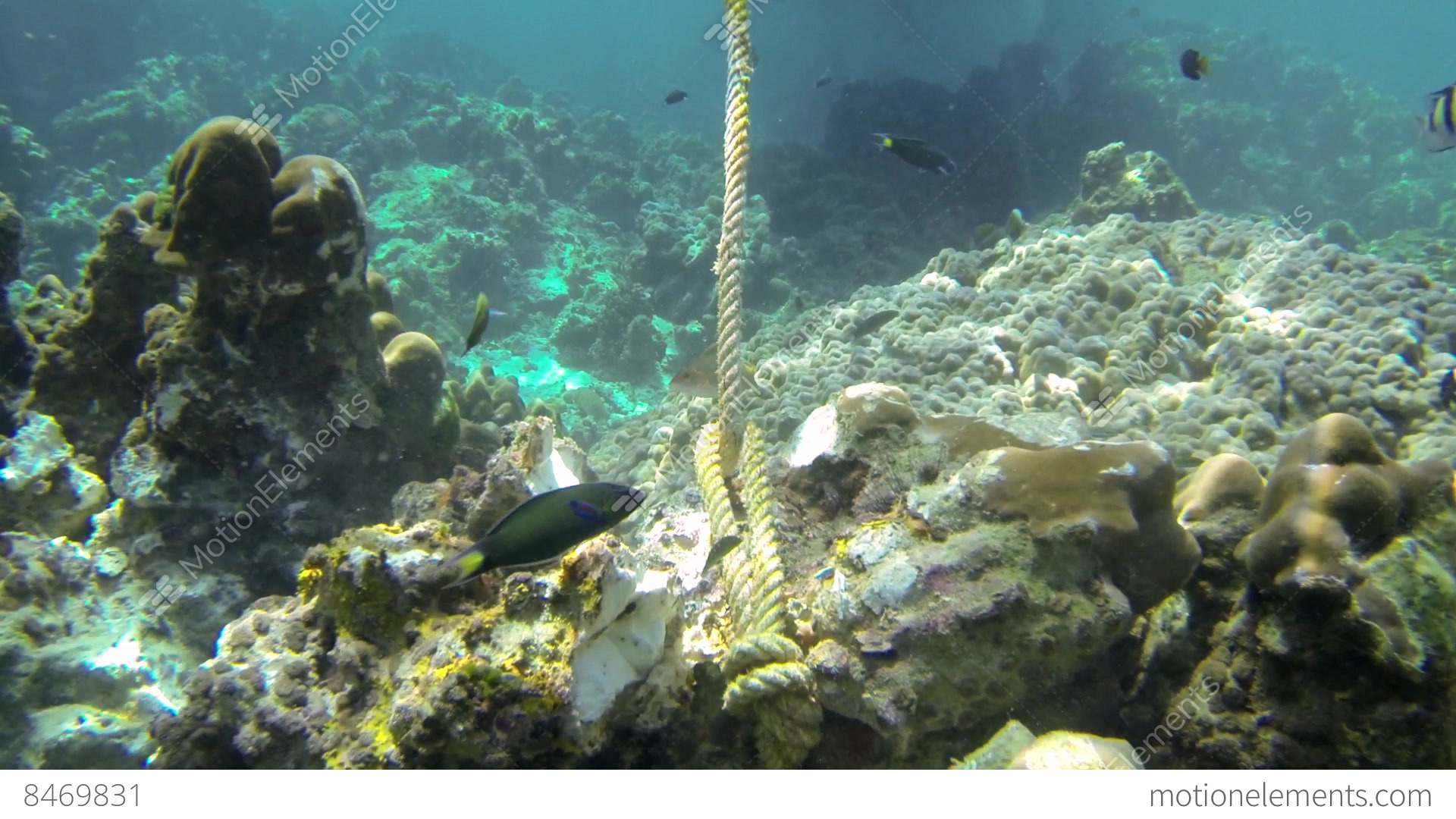 endangerment of coral reefs However, not all ecosystems are endangered and, in fact, in a lot of cases many species and populations are on the increase, evolving to suit a changing habitat so what's all the hassle about focusing on those ecosystems most at risk not all environments are exposed and pressured by the same.