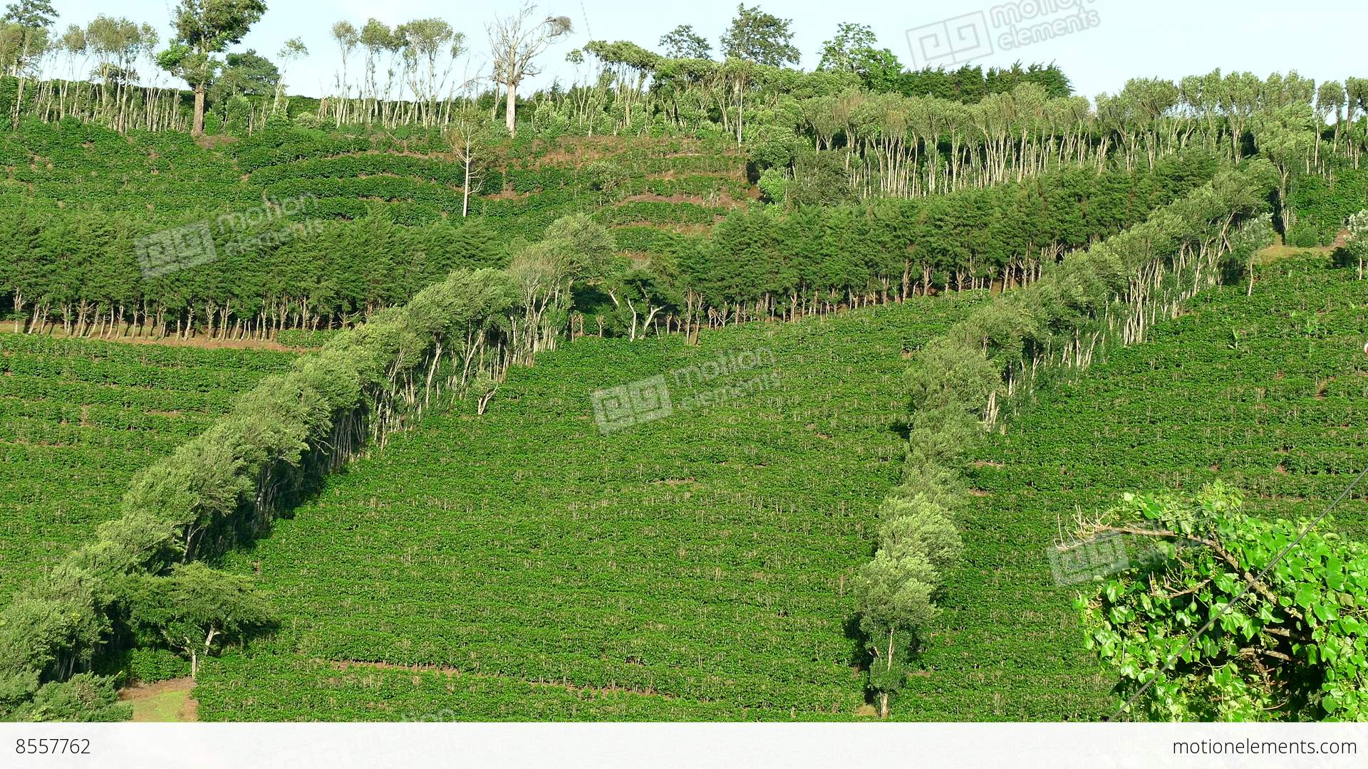 Agriculture in Brazil