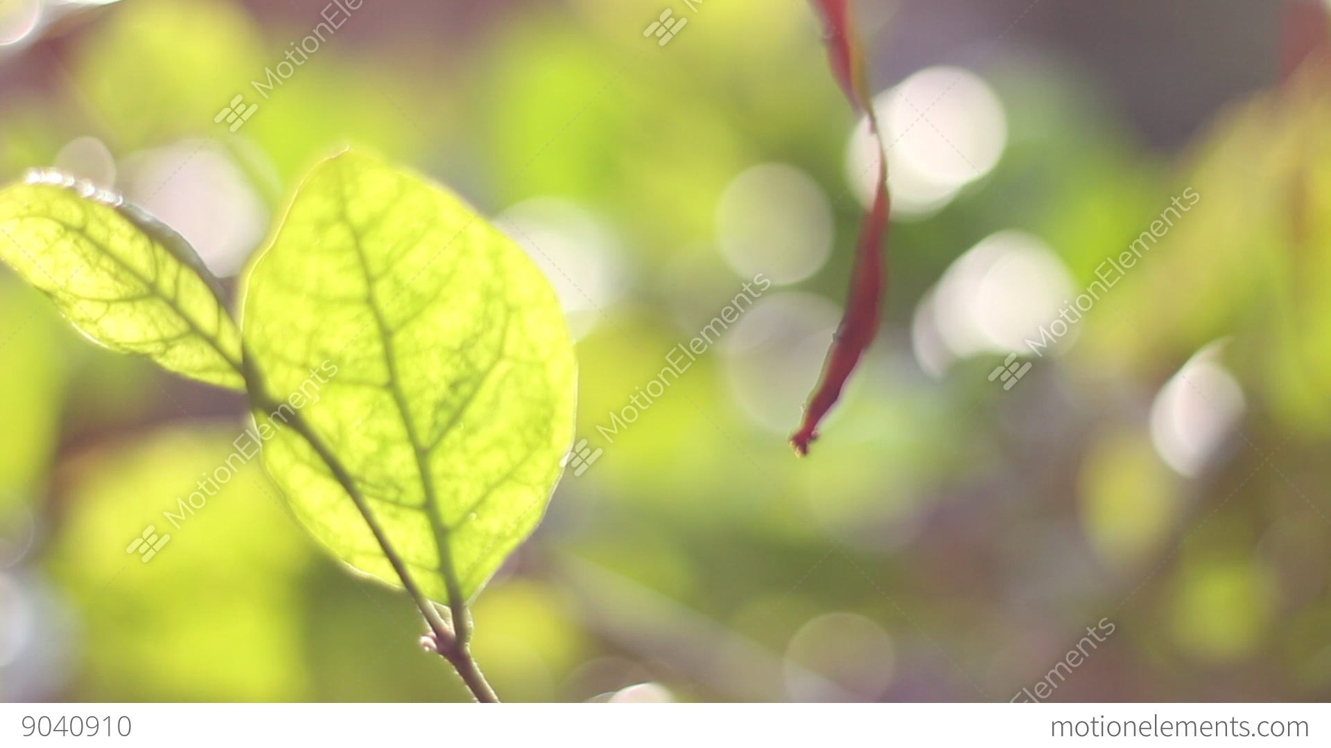 effects of sunlight on leaves The effects of sunlight on bean plants along with full sunlight, bean plants need adequate water for proper does the amount of sunlight affect the growth of.