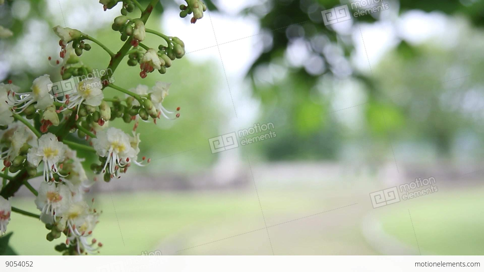 Branch of blossoming tree with small white flowers it sees the branch of blossoming tree with small white flowers it stock video footage mightylinksfo