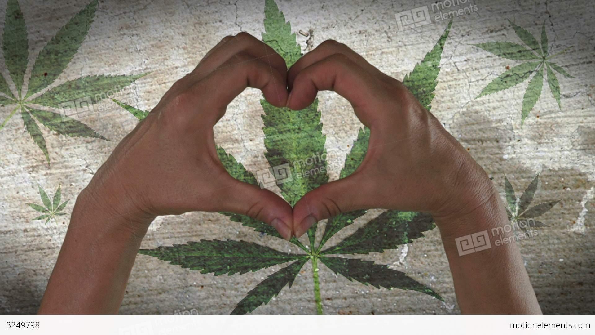 Hands Heart Symbol Marijuana Leaf Stock Video Footage 3249798