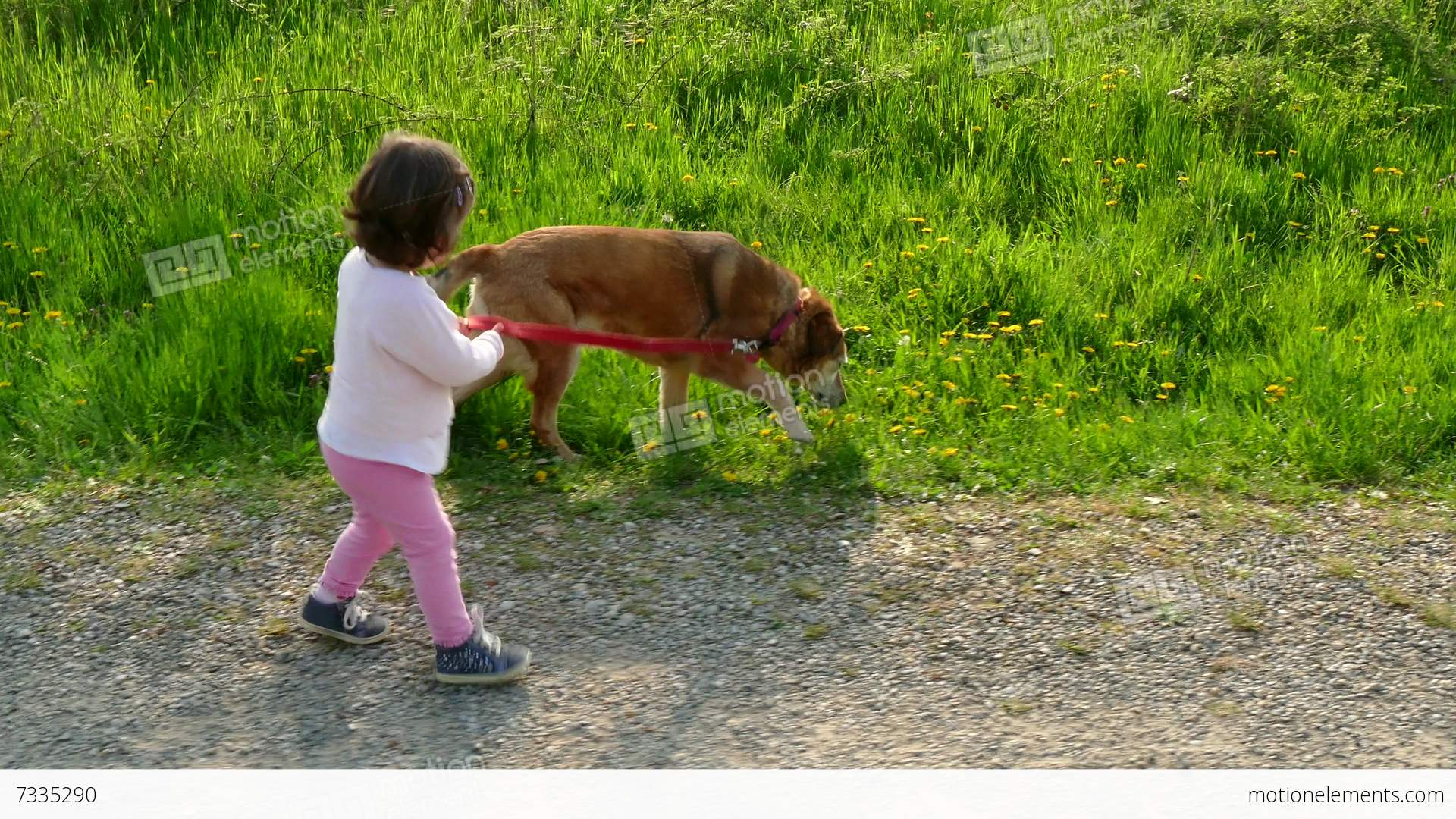 the effects of having a pet There are alternatives to boarding kennels and training centers that require kennel cough pet sitters are often inexpensive and in-home training is always available.