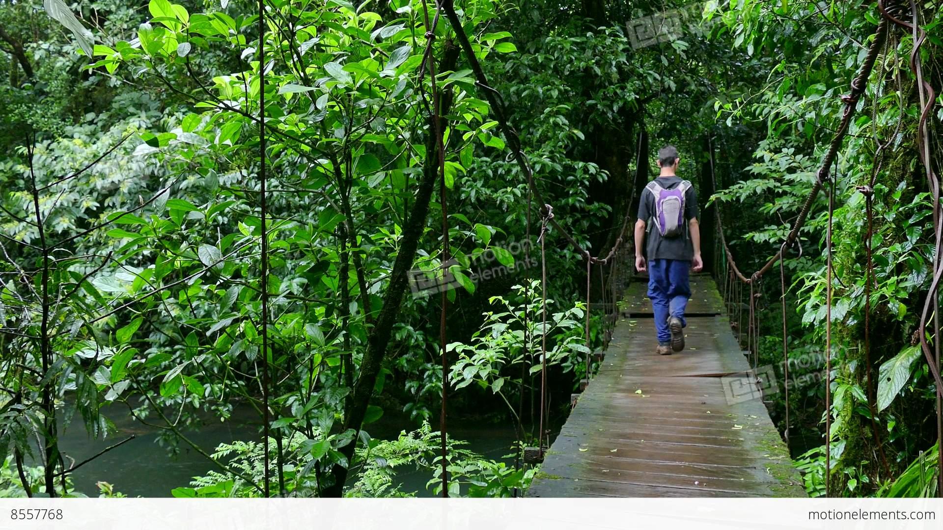 Man People Walking Trekking Hiking Hanging Bridge Jungle