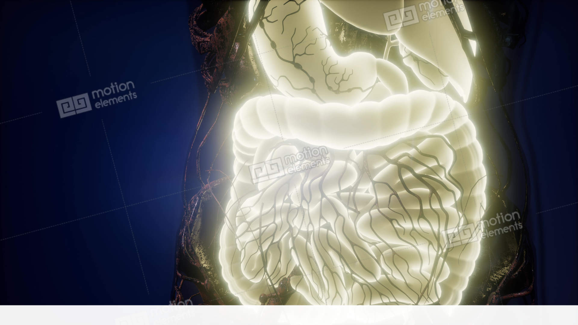 Dorable Anatomy Scan What To Expect Embellishment - Physiology Of ...