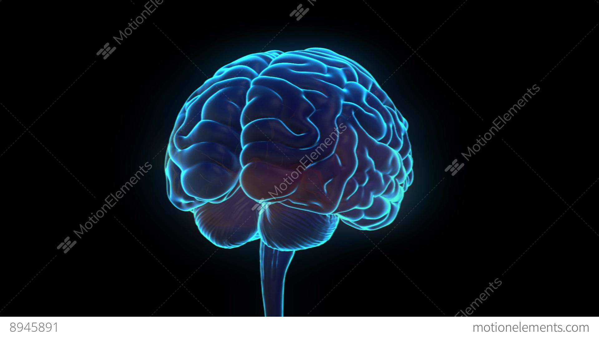 Science fiction medical design element rotating human brain science fiction medical design element rotating human stock video footage ccuart Gallery