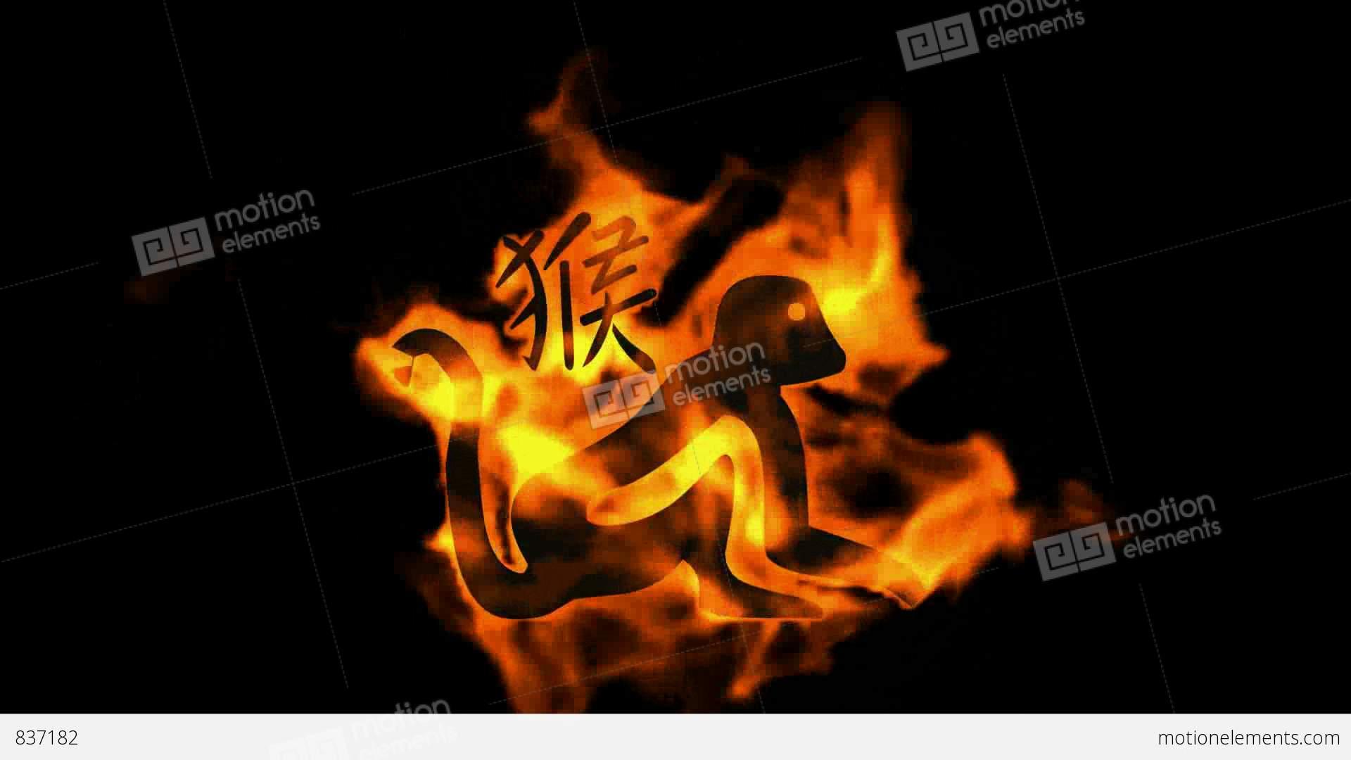 Chinese zodiac of fire monkey and handwriting chinese kanjichina chinese zodiac of fire monkey and handwriting chinese stock video footage symbols biocorpaavc Gallery