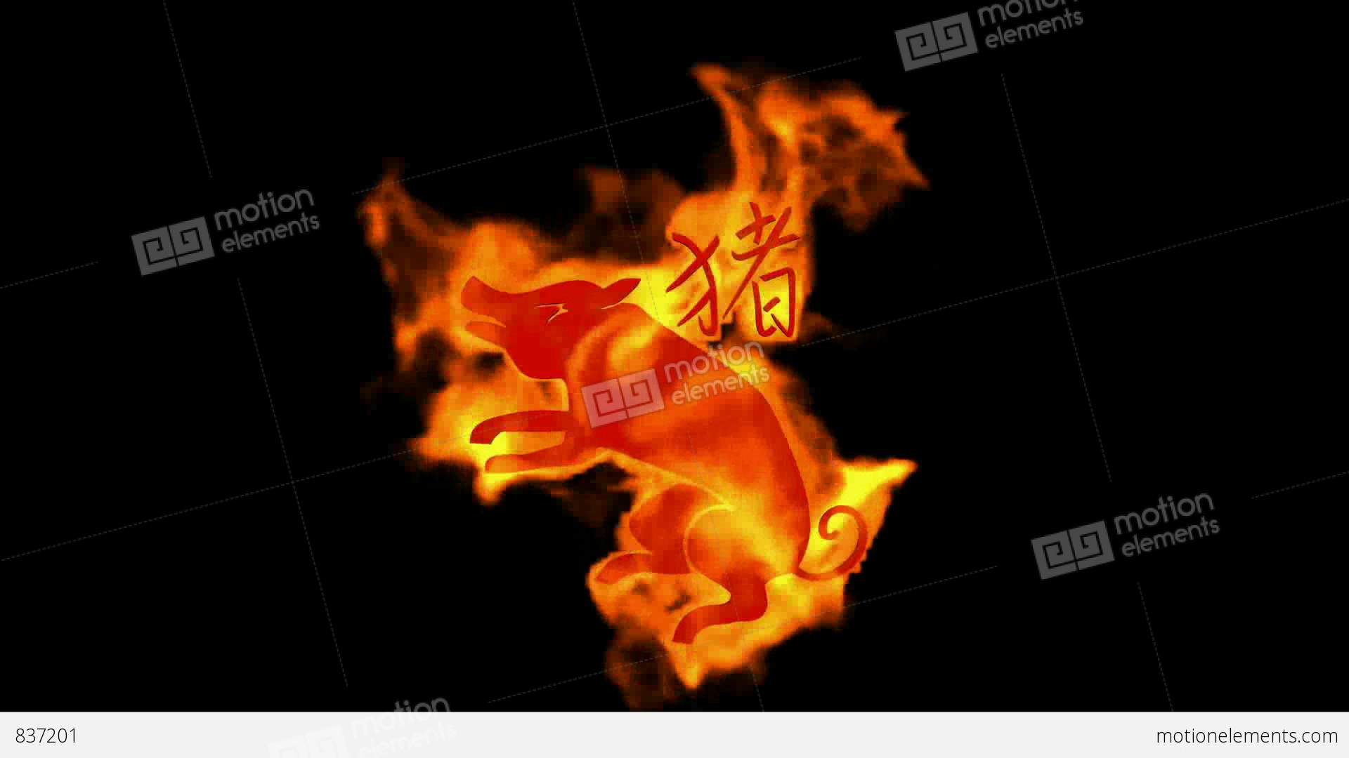 Fire Pig Images - Reverse Search