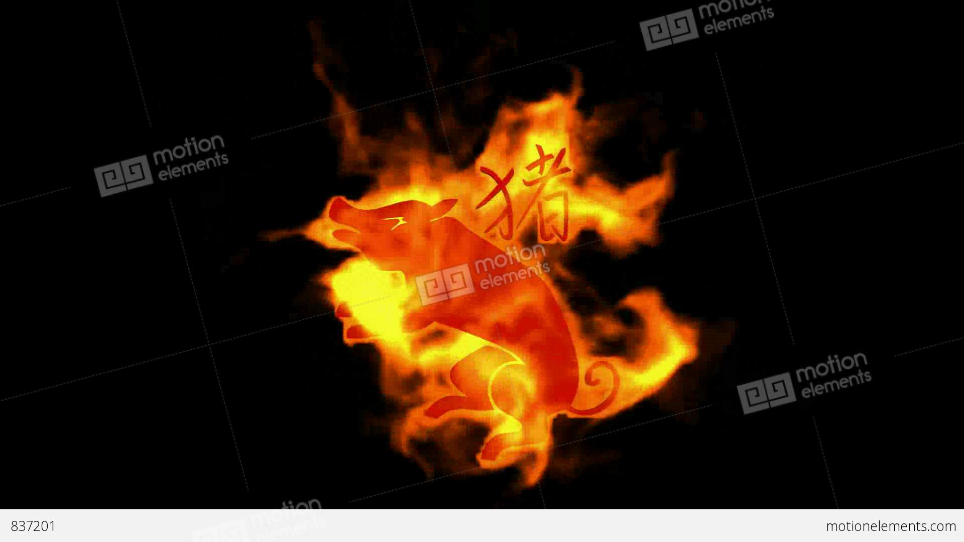Chinese zodiac of fire pig and handwriting chinese kanjichina chinese zodiac of fire pig and handwriting chinese stock video footage symbols biocorpaavc Gallery