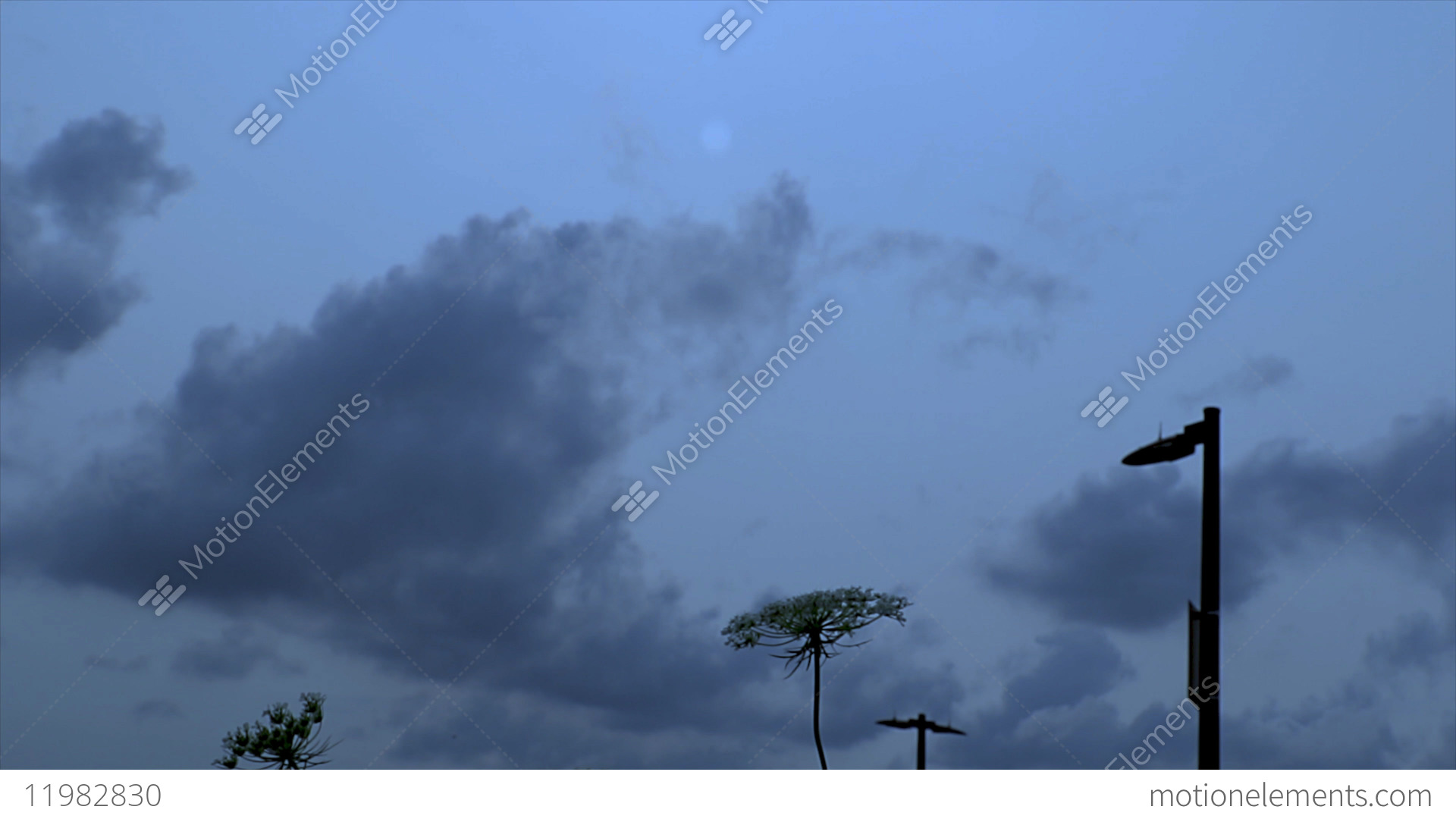 Ground View Of Plants With An Airplane Flying Over Head Stock Video Footage