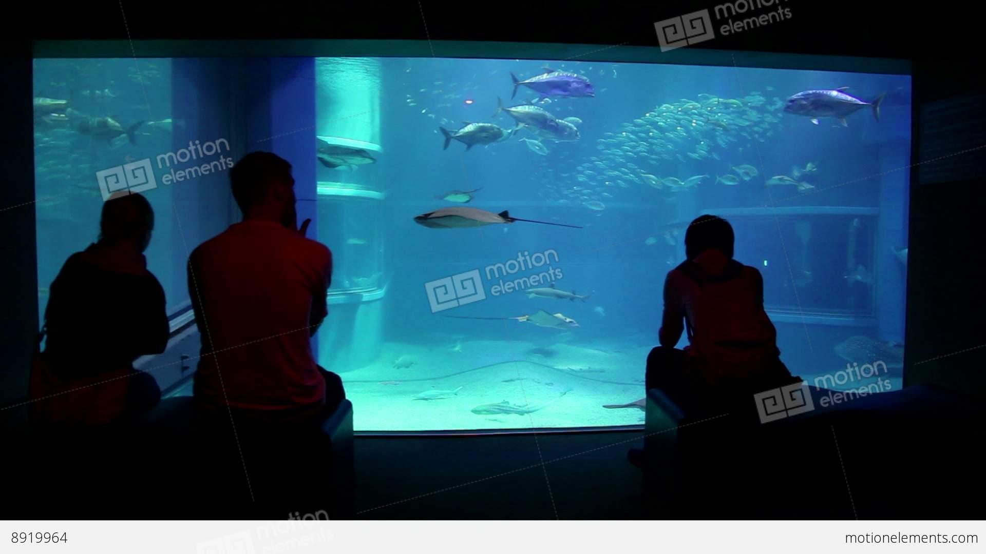 Fish aquarium japan - 10of 10 Fish Sharks People Tourists At Osaka Stock Video