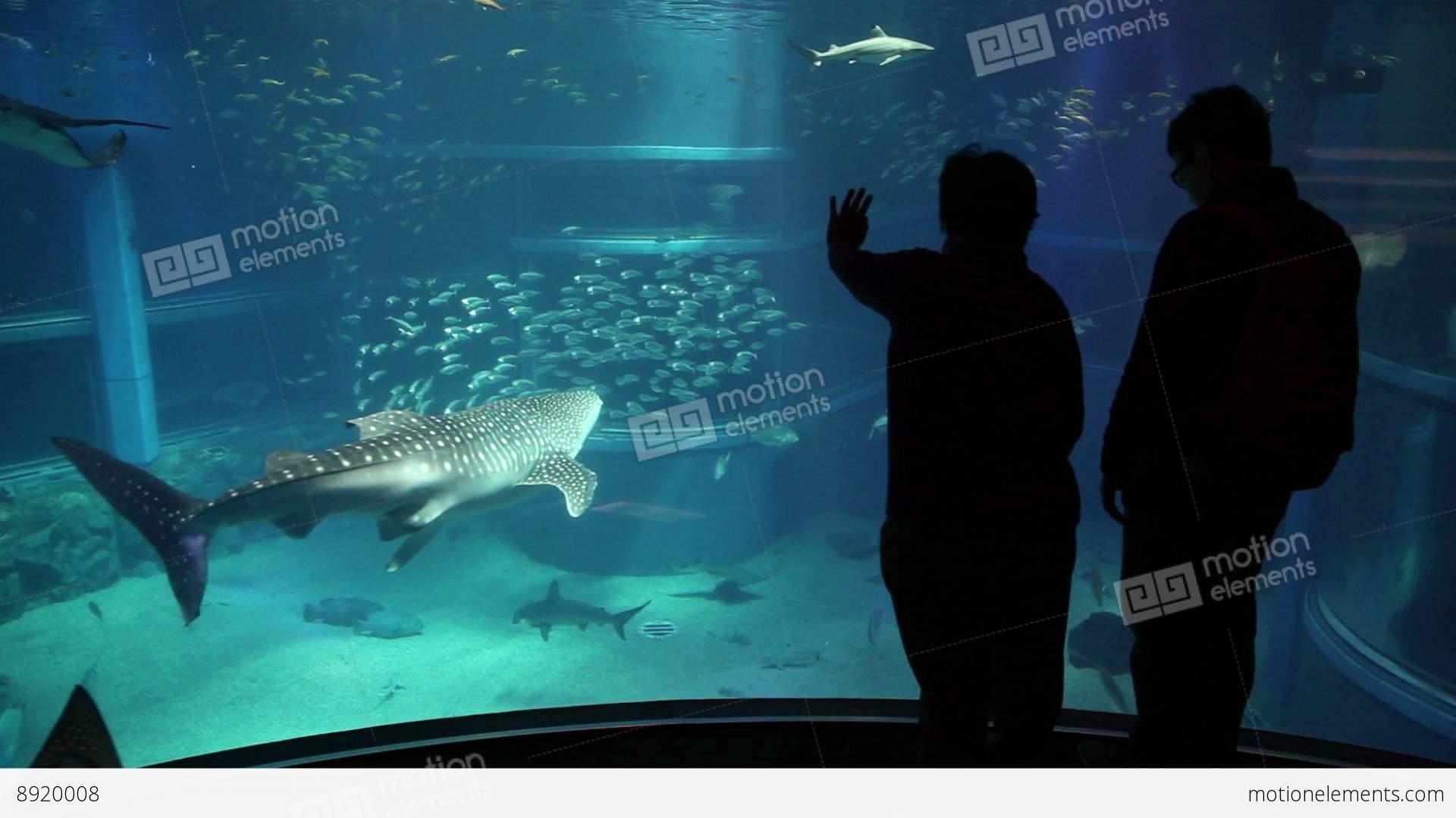 Fish aquarium japan - 6of 10 Fish Whale Shark Animals At Osaka Aquarium Stock