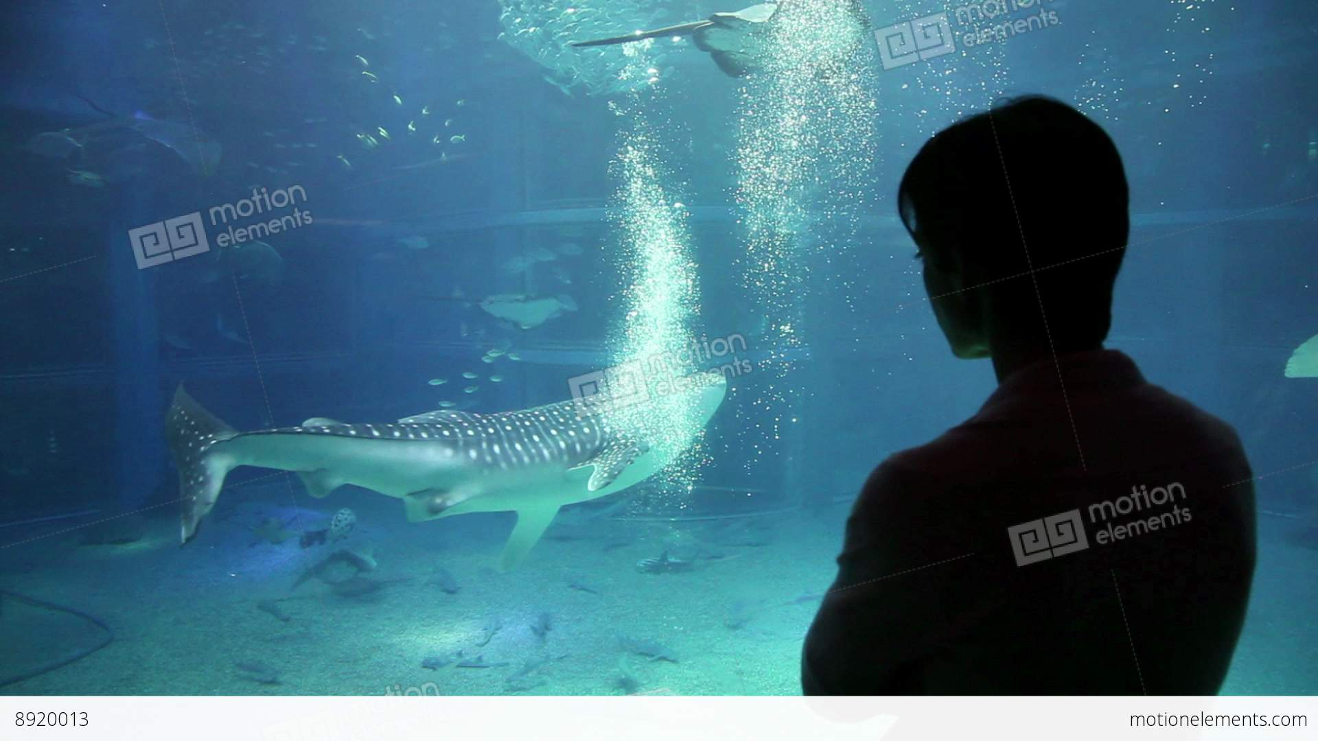Fish aquarium japan - 7of 10 Fish Whale Shark Woman At Osaka Aquarium Stock