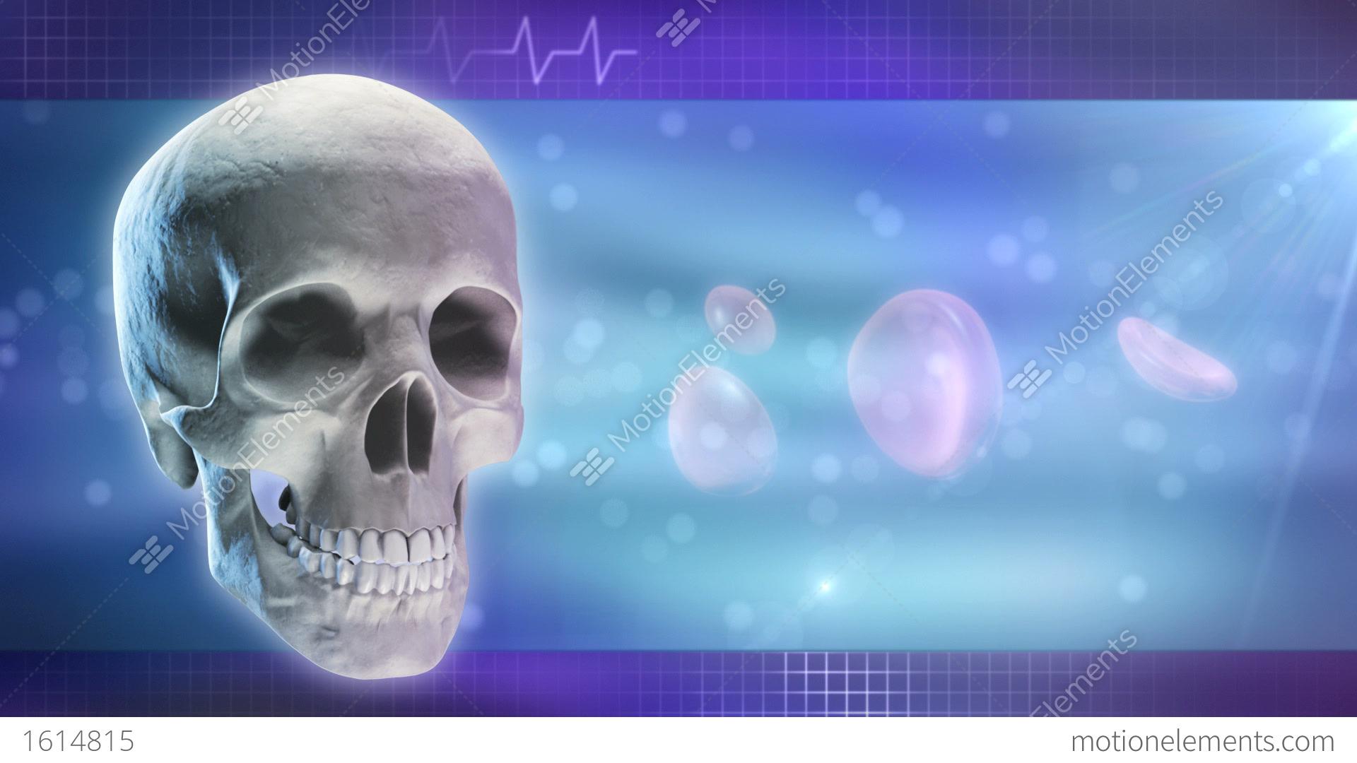 Anatomy And Medicine Background Stock Animation | 1614815