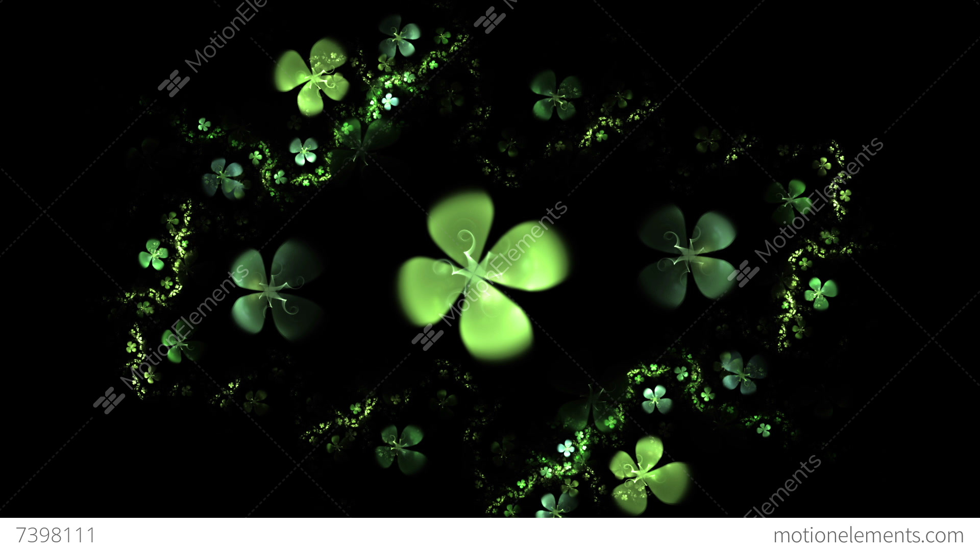 Green Four Leaf Clover On Black Animation Stock Video Footage